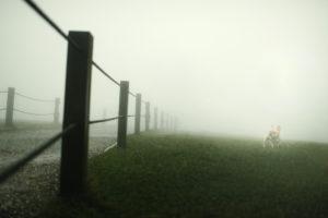 Donfer Photography, 寵物攝影